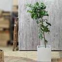 楽天e-花屋さん【送料無料(同梱不可)】人気の白マットSTYLE10号鉢がすっぽり!簡単お洒落!!ファイバークレイの鉢カバー(キューブtype)※植物は別売りです。