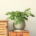 石の素材感たっぷり、ぽてっと丸みのあるデザインがキュート!このカタチ好きです。石の質感、植木鉢Mサイズ【4〜5号の植物に適したサイズです】※植物は商品に含まれません。