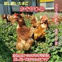 放し飼い卵 40個 かぐやひめ 送料無料 産地直送 生食用卵 九州産福岡県産 お中元 お歳暮 自然卵