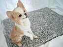 Comfortable pet mat (pet bed)! 40cm X 50cmG623 polishing finish