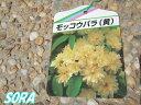 モッコウバラ 13.5〜15cmポット 3本 【RCP】05P03Dec16