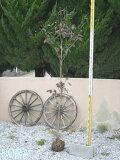 花水木 白 単木 樹高 H:2000mm 【RCP】05P13Nov14