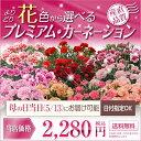 【母の日ギフト カーネーション(5号鉢) 母の日 花】フラワ...