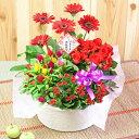 送料無料【花かご ギフト】4種の花で作る花かごギフト