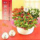 敬老の日 花【花かご ギフト】3種の花で作る季節の花かごギフ...