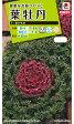 タキイ種苗 【メール便対応】[タキイ交配]葉牡丹 紅かもめ(FHB571)※5000円以上お買い上げで送料無料