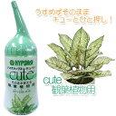 【ハイポネックス】【液体肥料】キュート 観葉植物用 150ml