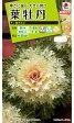 タキイ種苗 【メール便対応】[タキイ交配]葉牡丹 F1白さんご(FHB612)※5000円以上お買い上げで送料無料