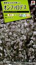 【メール便対応】【タキイ種苗】【花種】オンファロデス リトルスノーホワイト(FSZF97)