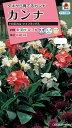 【メール便対応】【タキイ種苗】【花種】カンナ トロピカル ツインミックス(FCA120)