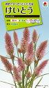 【メール便対応】【タキイ種苗】【花種】けいとう キャンドル(FKT322)