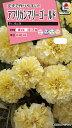 【メール便対応】【タキイ種苗】【花種】アフリカンマリーゴールド F1 バニラ(FMN510)