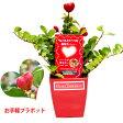 ハートツリー 花 TVや雑誌で話題! 赤いハート の実 がなる木 誕生日 プレゼント 結婚祝い 出産祝い おすすめ ギフト 鉢 鉢植え ミニ植物 jbcht 2540021 2540022(c)