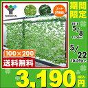 【あす楽】 山善(YAMAZEN) グリーンフェンス リーフラティス(約100×200cm) LLH-12C/LL
