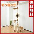 山善(YAMAZEN) 天井突っ張り式キャットタワー YCT-250 キャットスタンド 【送料無料】