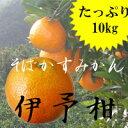 伊予柑~アウトレットみかん~【10kg】【訳あり】