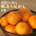 【有機栽培】 佐藤さん家の訳ありみかん 3.5kg 【無農薬・無化学肥料】【サイズ混合】【柑橘まとめ買い対象】