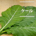 【特別栽培・無化学農薬(無農薬)】 ジュース用ケール(生)1kg 【生葉】【静岡産】