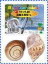 [三晃商会]オカヤドカリの宿替え貝殻(L)