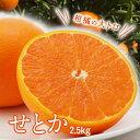 せとか 愛媛県産 2.5kg 柑橘 蜜柑 果物 送料無料 家庭用 贈答用 ギフト用 豊洲 お取り寄せグルメ