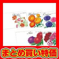 イラスト花の種子アスター、かすみ草、ヘリクリサムなでしこ、矢車草(SPC200)※セット販売(100