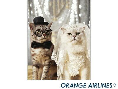 ��������饤��ORANGEAIRLINES/������åץե����Х�(M)Cat'sWedding����åĥ����ǥ���AL-149��
