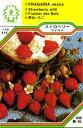 【メール便可】ハーブ・西洋野菜の種 「ストロベリーワイルド」