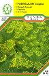 【DM便対応可】ハーブ・西洋野菜の種 「フェンネル スイート」