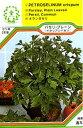 【メール便可】ハーブ・西洋野菜の種 「イタリアンパセリ(パセリ・プレーン)」