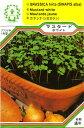 【DM便可】ハーブ・西洋野菜の種 「ロケットサラダ(ルッコラ / エルーカ)」