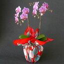ミディ胡蝶蘭 風呂敷包み 2本立ち ピンク色 竹久夢二 つばき