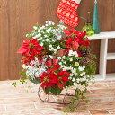 寄せ植え「クリスマスリース�華やかなリースでおもてなし�」