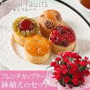 【早割!5%OFF】【母の日フラワーギフト】鉢植えセット「ホシフルーツ フレンチカップケーキ」