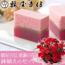 【母の日フラワーギフト】【送料無料】鉢植えセット「鶴屋吉信 感謝の花」