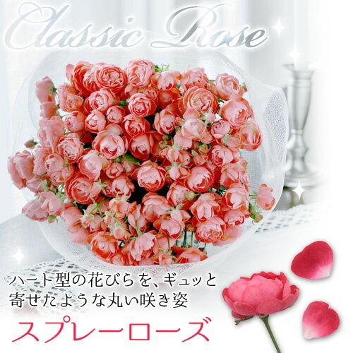 【花束/ブーケ】クラシックローズ「スプレーローズ」【千趣会イイハナ】