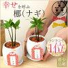 ミニ観葉植物のイメージ