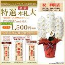 豪華特選木札 【有料】 別途1,620円単品では販売できません。