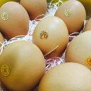 熊本天草産 高級卵 \タマンゴ10個/ マンゴーの配合飼料で育てた鶏の高級 卵かけご飯 贈答品卵 贈答用卵 高級卵通販