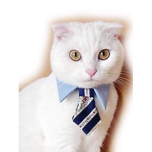 プリンカンパニー キャットプリン ネクタイシャツ ブルー(1枚入)【smtb-s】