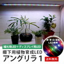 棚下用植物育成LED アングリラ1【送料無料】ディスプレイに適しています。より自然光に近く植物をきれいに見せながら、成長させるLEDライト[LED][水耕栽培]...