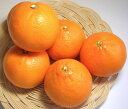 甘さ抜群!柑橘類の中でも最高クラスの美味しさ!希少価値満点です♪高級柑橘「せとか」/約5Kg(約23玉前後)愛媛県・萩森さんが有機肥料100%活用で減農薬栽培!