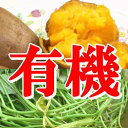 苗♪有機栽培用サツマイモ極上【有機安納芋の苗】50本日本でここだけ【有機JAS】坂出市/宮下泰典さんが無農薬・有機栽培!さつまいもの苗【2sp_120314_b】