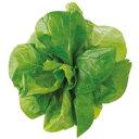 ユーイング Green Farm用種子(サラダ菜) UH-LA06 [UHLA06]【10P03Dec16】