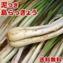 島らっきょう沖縄県産 2kg 送料無料! 今なら200gオマケ付き!たっぷり買うなら絶対お得! 沖縄野菜(らっきょう 生 国産) 天ぷらや漬物、ビールのお供に島らっきょうをお取り寄せ まとめ買い |野菜 |(rakkyo_2_w)