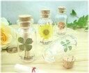お洒落なメッセージボトル【四つ葉の押し花・小花】