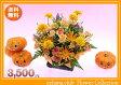 10月の誕生花★ビタミンオレンジアレンジ3,500円【送料無料】【ガーベラ】花言葉カード付き【写真付きメッセージ選択可】【あす楽対応】 【tokaipoint11_16】