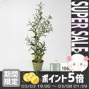 【送料無料】 【あす楽対応】 アーティフィシャルグリーン オリーブツリー olive tree grass bucket 106cm Lサイズ [HAGIHAR...