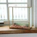 FARM ウォールテラリウム 93086 ガラステラリウム ガラスケース 観葉植物 室内園芸 壁掛けタイプ