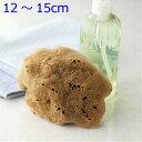 洗顔 ボディ洗い【敏感肌にやさしい】無脱色天然海綿スポンジ最高級シルク種M乾燥時12〜15cm(お水で膨らみます)ナチュラル色送料無料