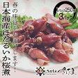 《あす楽》日本海産ホタルイカ桜煮750g(250g×3パック)レビューで越前塩のオマケ付き送料無料!ボイル蛍烏賊10P07Feb16